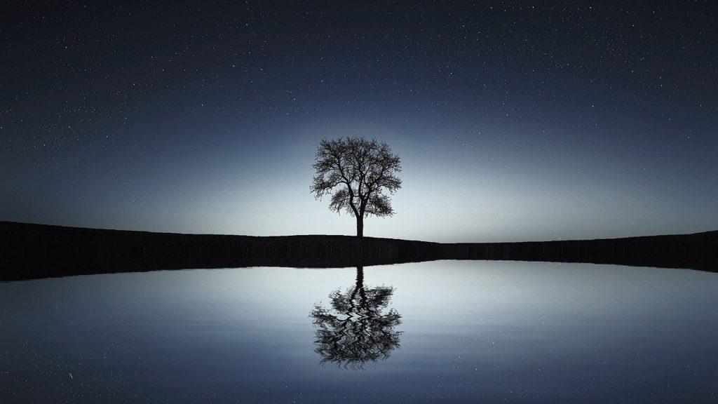 Baum in ruhiger Landschaft
