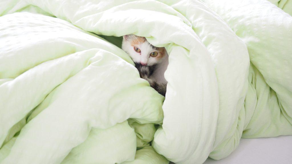 Katze in Bettdecke versteckt