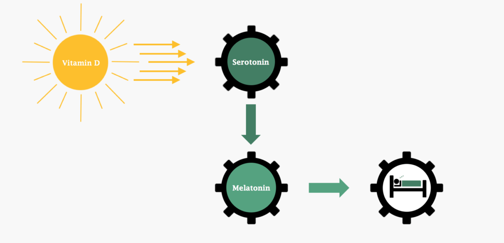 Darstellung der Wirkung von Vitamin D, Serotonin und Melatonin.
