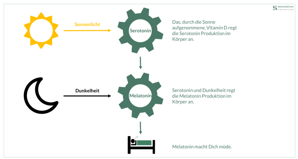 Einfluss von Sonnenlich und Dunkelheit auf die Melatonin- und Serotoninproduktion - Infografik